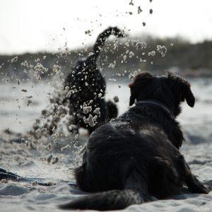 Hunde fun
